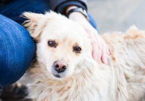 Dog - emotional support