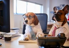 Bulldog And Beagle Dressed As Businessmen At Desk With Compute