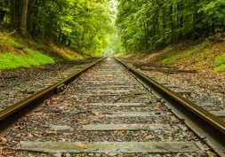 railroad tracks in the middle of the woods