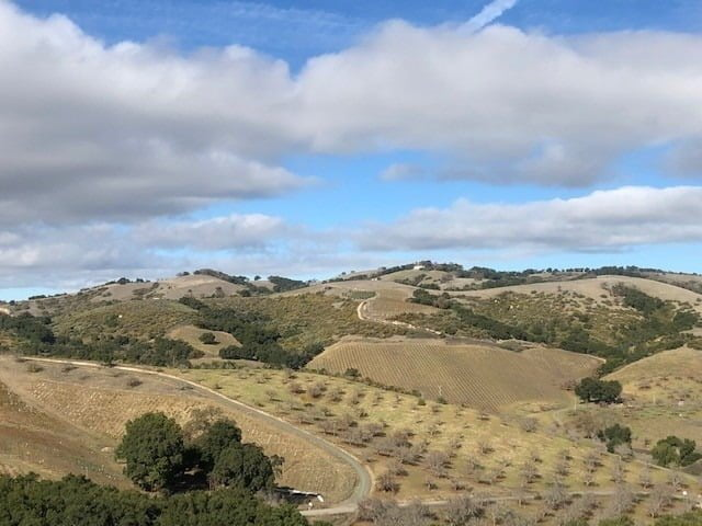 Landscape photo of Denner Vineyards- you see green fields and green bushes and trees